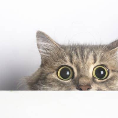 Curiosity didn't kill the cat, it made sense of the world